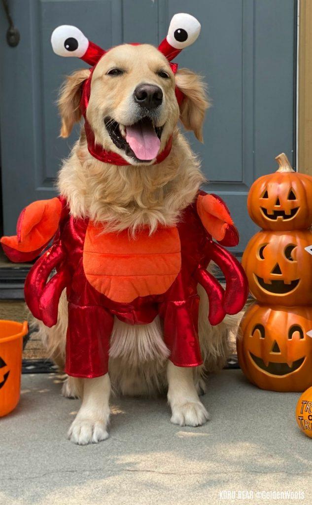 disfraz de halloween de perro langosta
