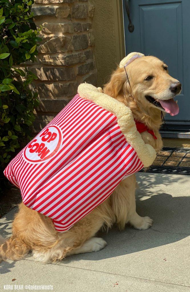 Popcorn Dog Halloween Costume