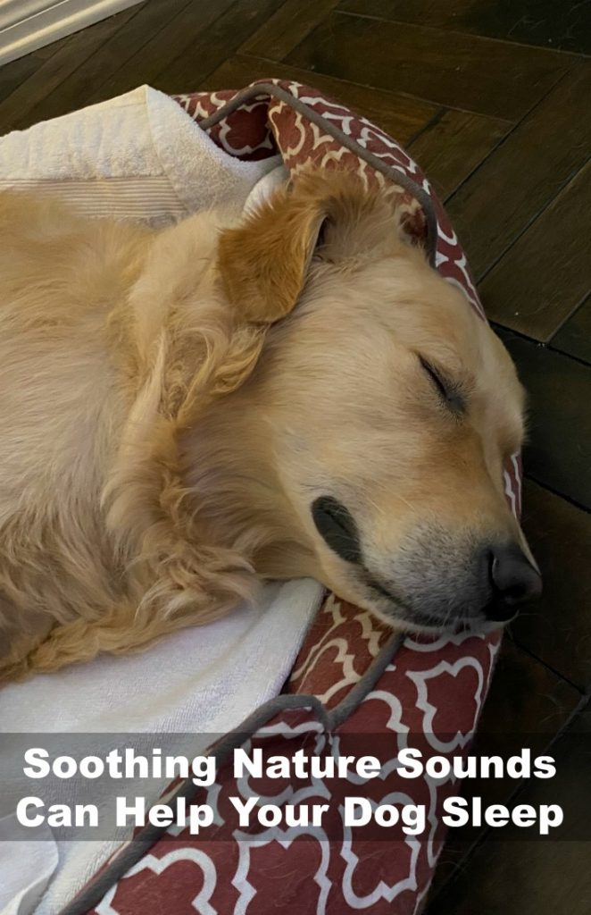 Soothing Nature Sounds Can Help Your Dog Sleep