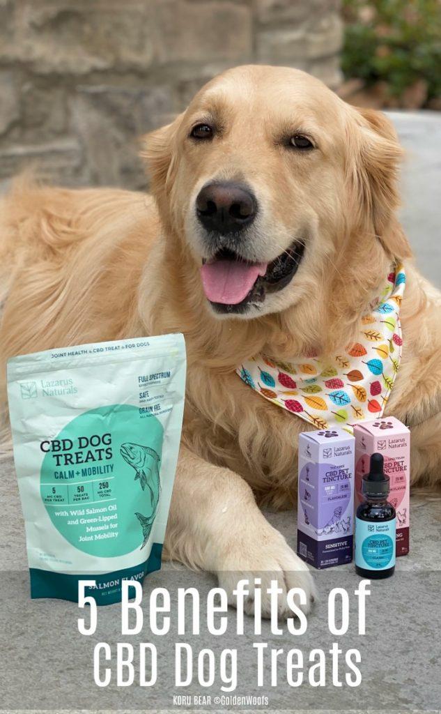 Benefits of CBD Dog Treats Lazarus Naturals