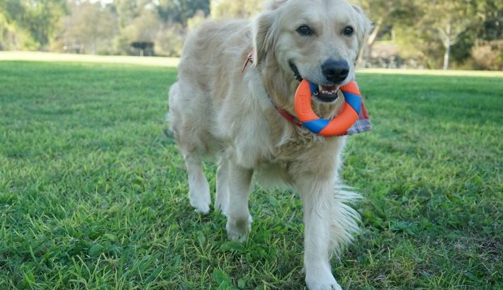 Why Do Dogs Love To Play Fetch?