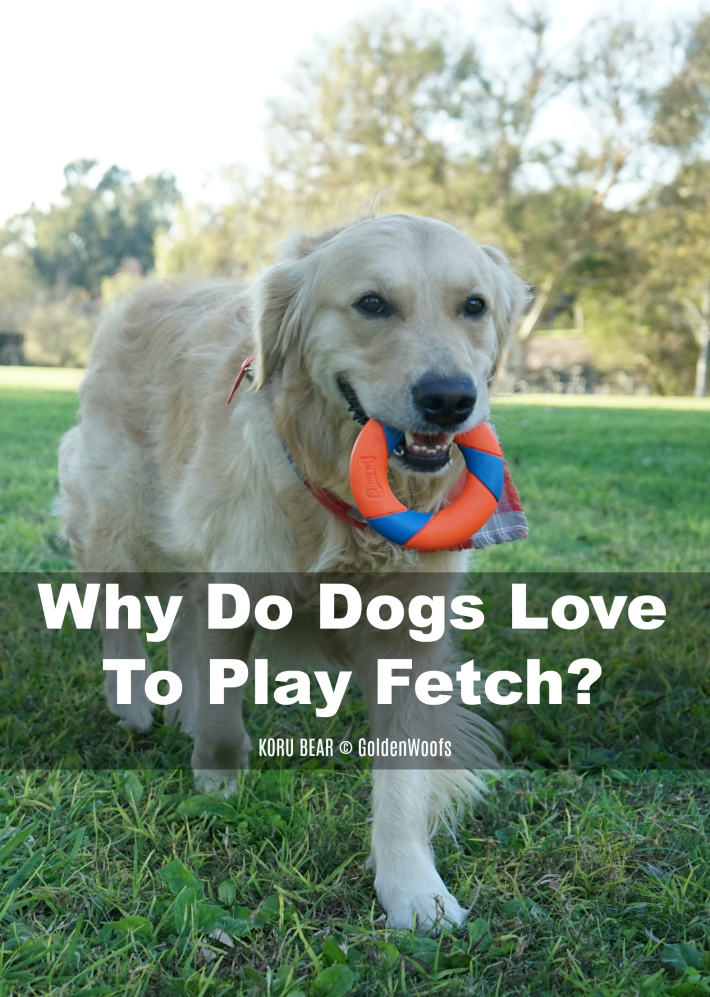 Why Do Dogs Love To Play Fetch - Make Fetch Happen with Chuckit!