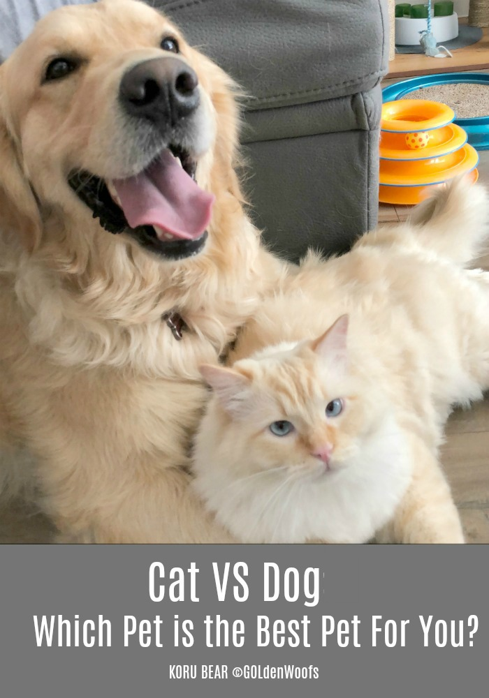 cat vs dog - Which pet is best for you