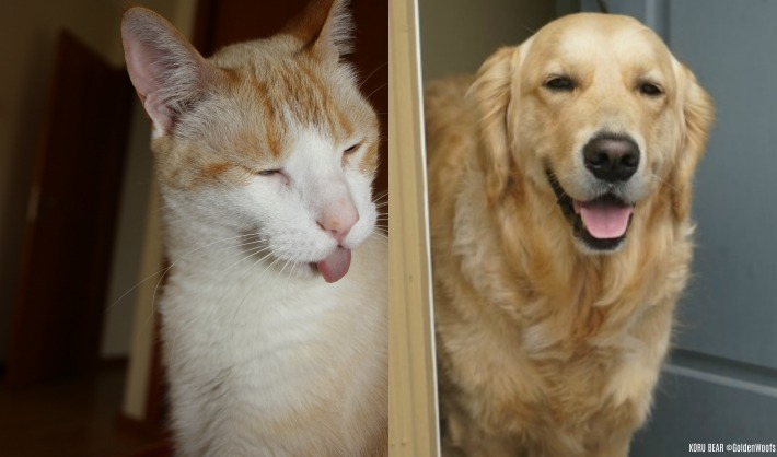 cat vs dog Which pet is best for you