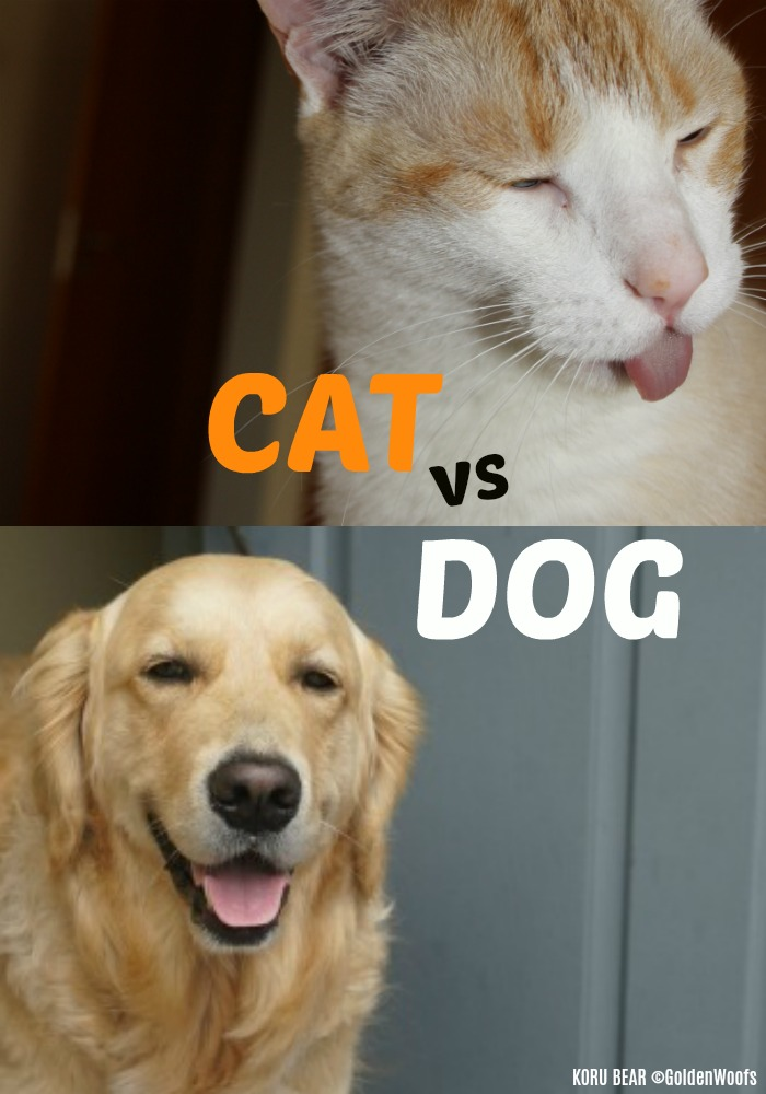 Cat VS Dogs: Which Pet is the Best Pet For You?