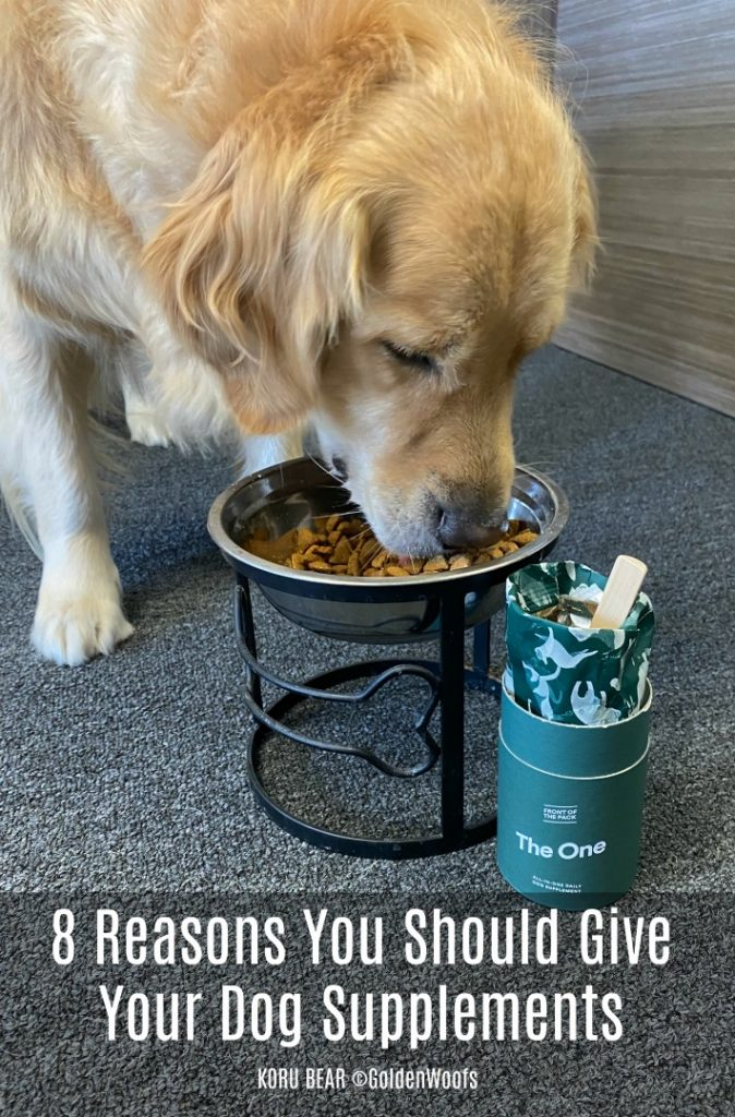 8 reasons you should give your dog supplements