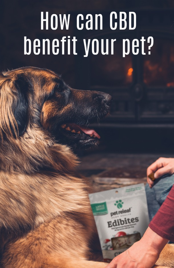 Pet Releaf: CBD benefit your pet