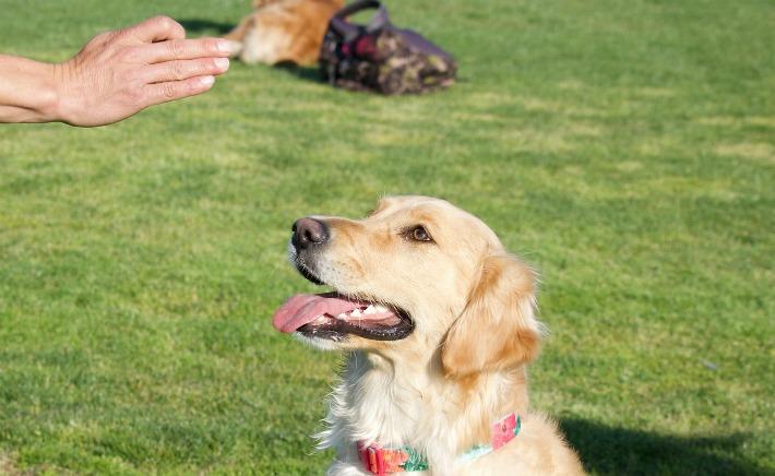 Pet Releaf Dog Chews Hemp Oils
