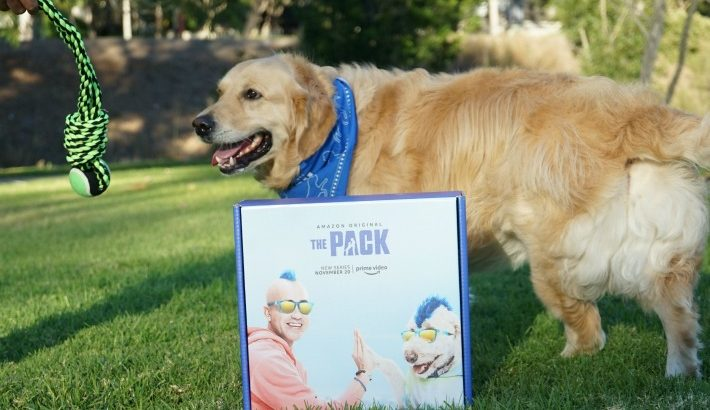 Build A Stronger Bond with Your Dog #PackedWeekend