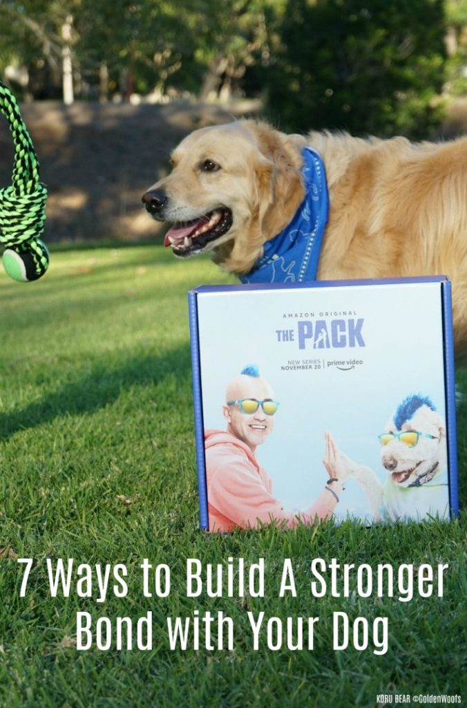 Ways to Build A Stronger Bond with Your Dog