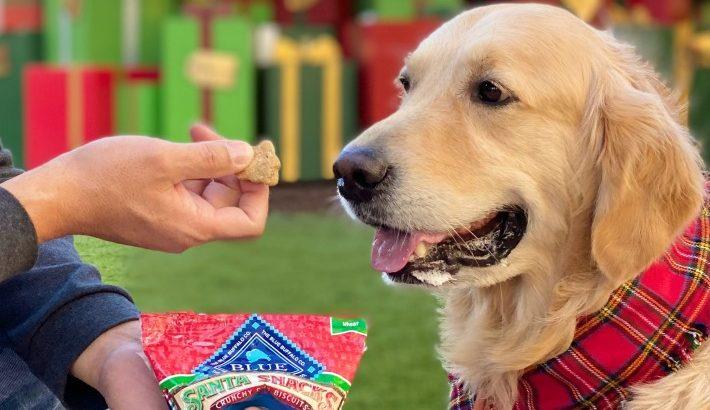 DIY No Sew Dog Treat Pouch | Blue Buffalo Santa Snacks #BlueHolidaysAtWalmart