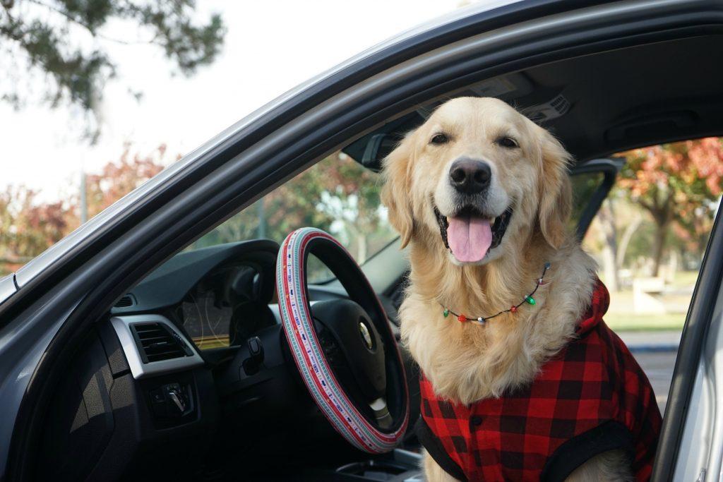 Dog Travel Winter Tips Autotrader Kelly blue book