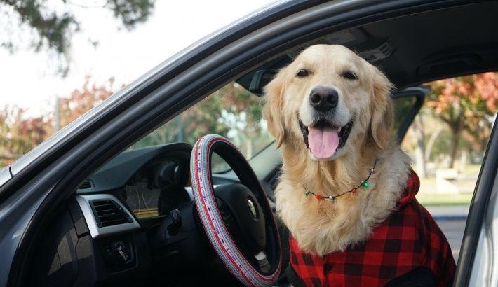 California Dog Travel Winter Tips