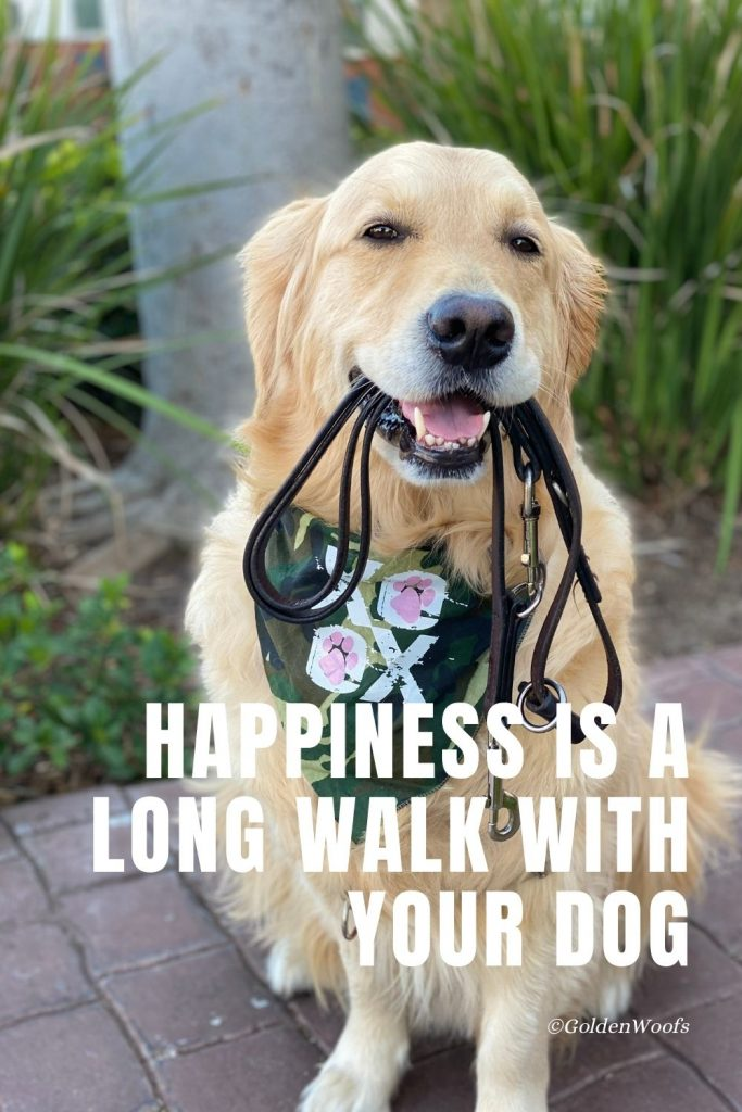 Happiness Is A Long Walk With Your Dog