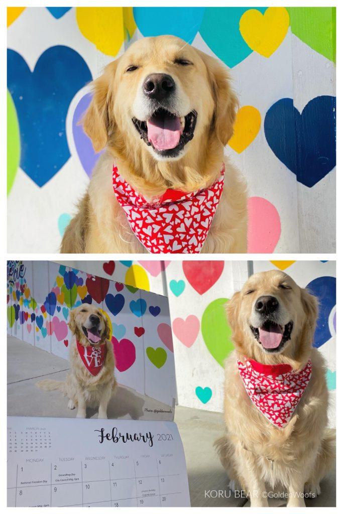 Calendar Dog KORU BEAR February 2021