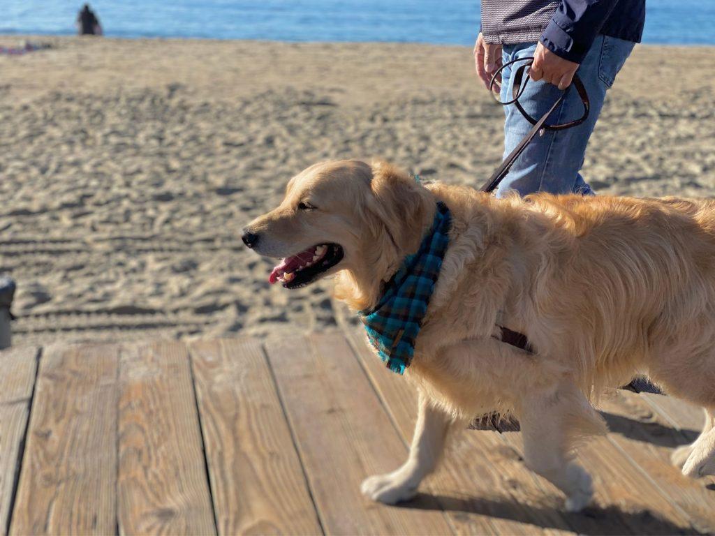 benefits walking your dog