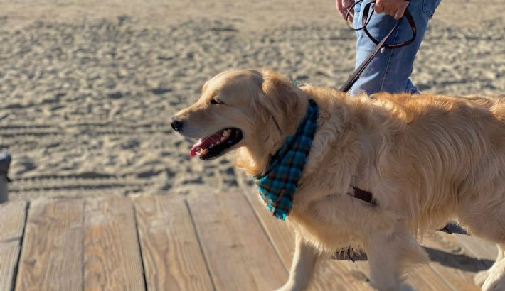 10 Benefits of Walking Your Dog
