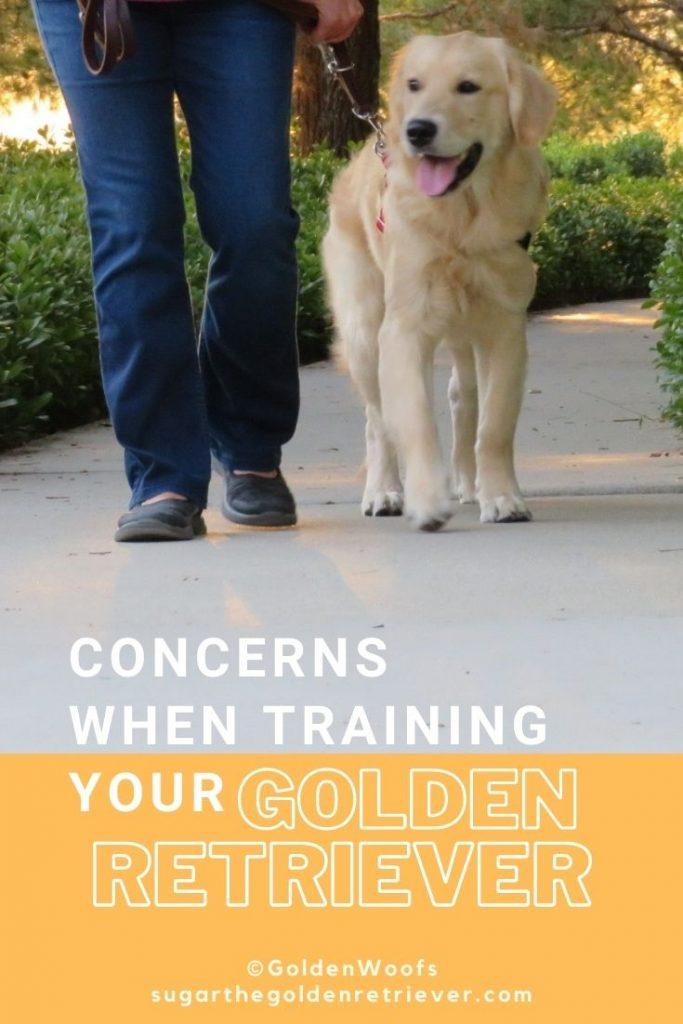 concerns when training your golden retriever