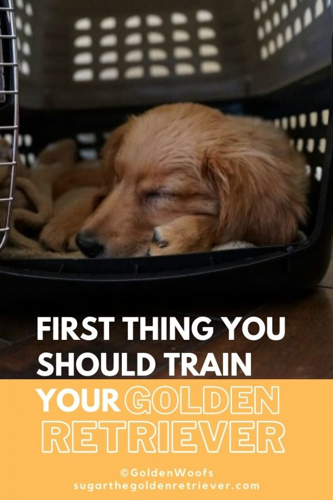 first thing to teach your golden retriever puppy