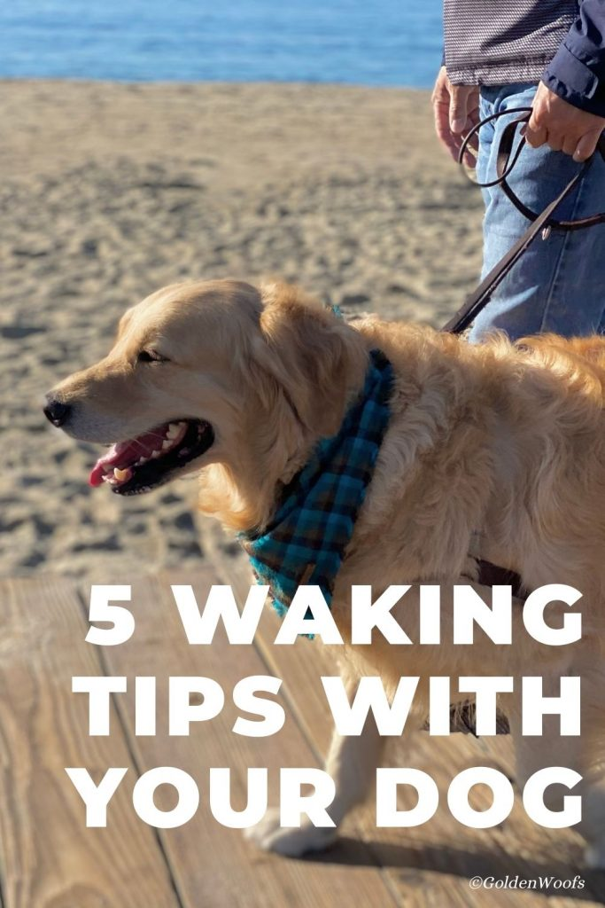 walking tips with your dog