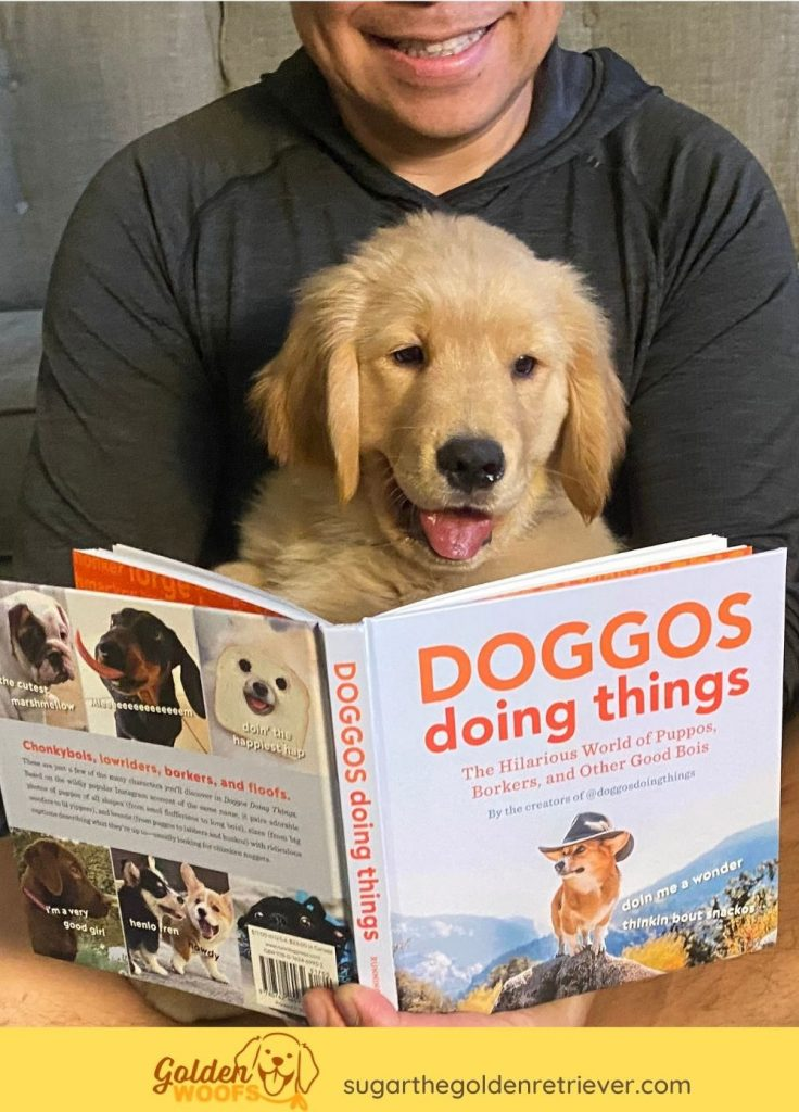 DOGGOS Doing Things BOOK