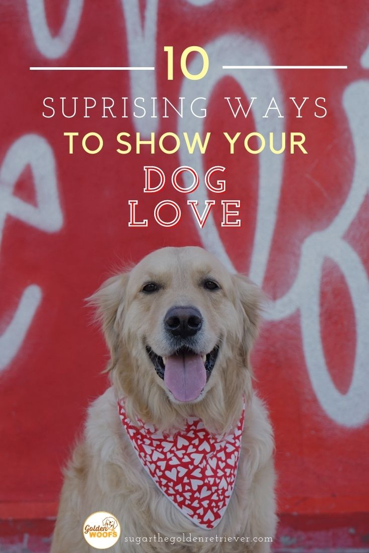 Love Your Pet Day! 10 ways to show your dog love