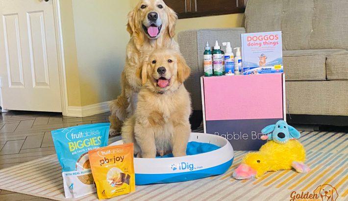 Fun Healthy Ways to Spoil Your Pup  #SpoilYourPupBBxx