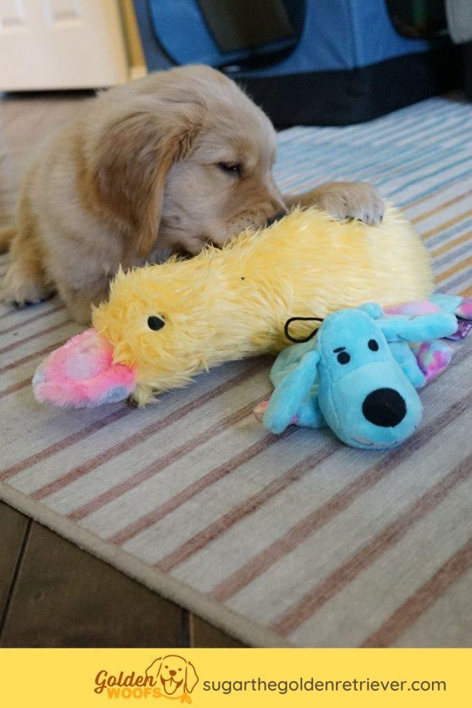 multipet dog toys