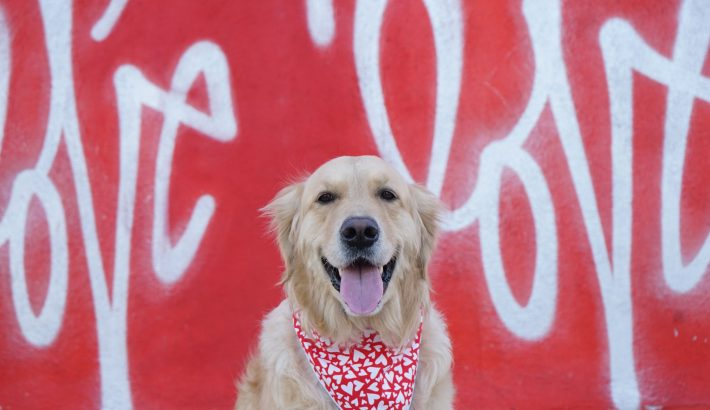 10 Surprising Ways To Show Your Dog Love
