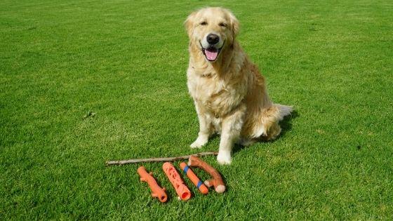 Dogs Love Sticks | Safe Sticks Your Dog Can Play Fetch