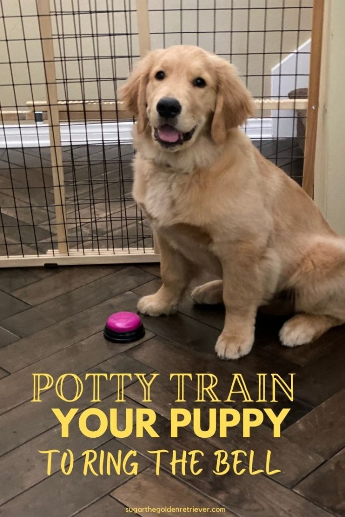 potty train your puppy dog bell