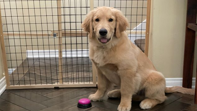 puppy training using potty bell