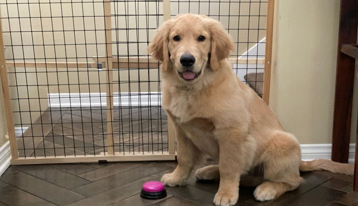 Potty Train Your Puppy to Ring the Bell to Go Outside