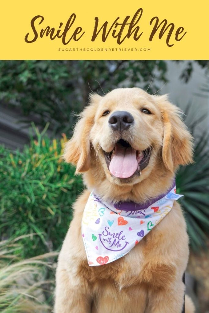 Smile With Me dog bandana