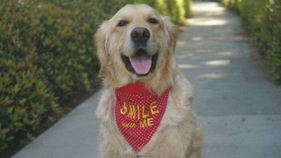 60 Smile Captions for Your Dog Photos