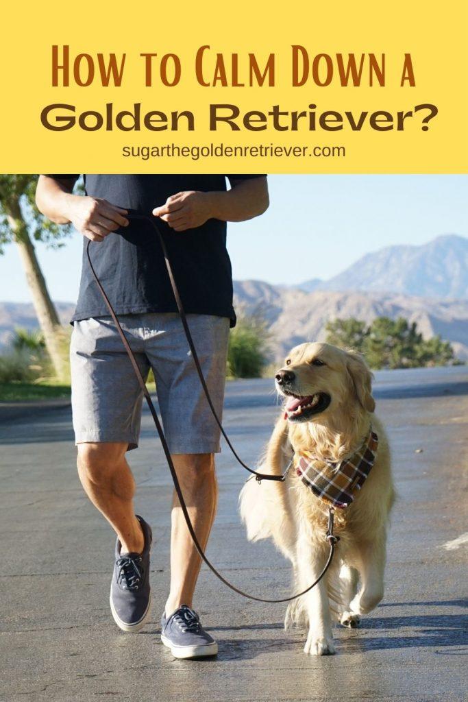 How to Calm Down A Golden Retriever?