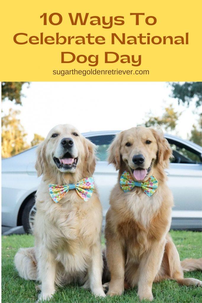 Celebrate National Dog Day - Dogtrader