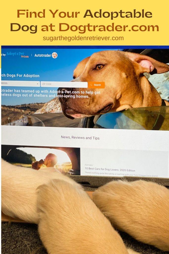 adoptable dogs at dogtrader.com