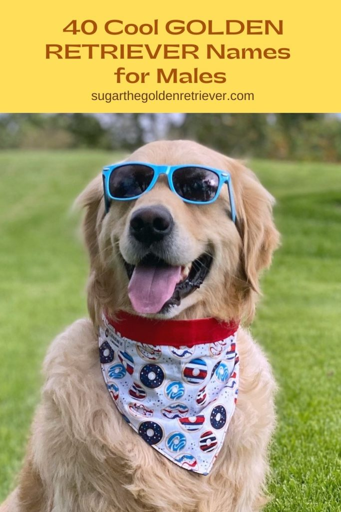 cool golden retriever name for males