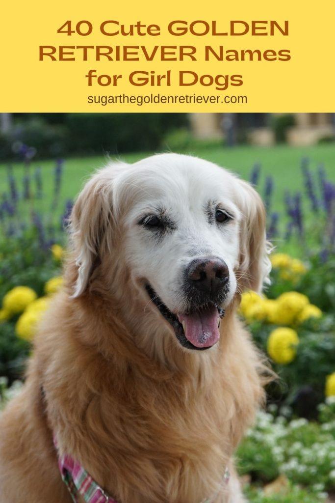 cute golden retriever names for girl dogs