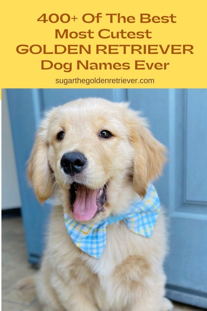 cutest golden retriever dog names