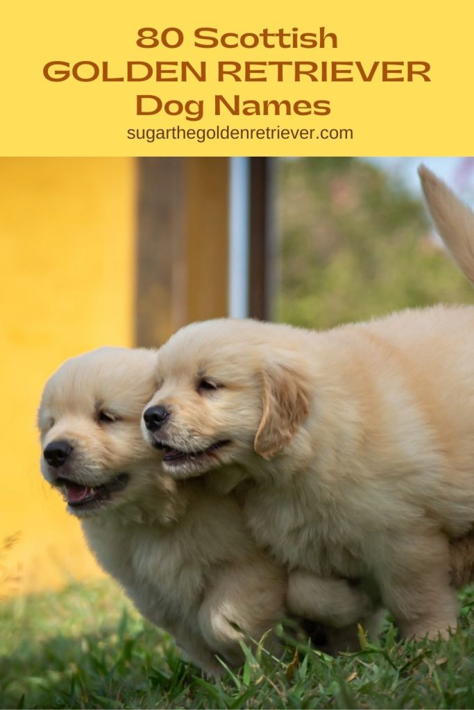 scottish golden retriever dog names