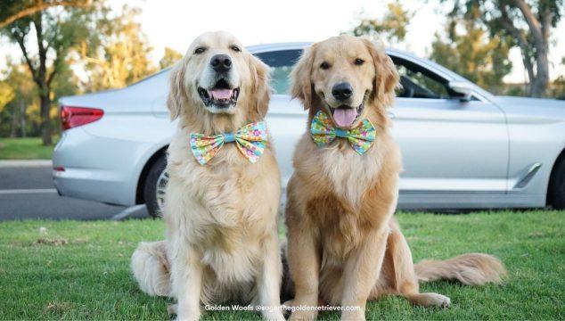 ways to celebrate National Dog Day Autotrader Dogtrader