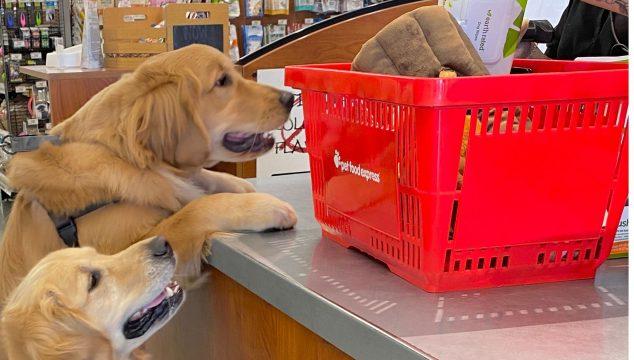 shop at pet food express pet store supply
