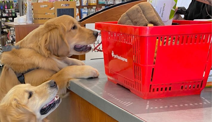 10 Reasons To Shop At Your Local Pet Store: Pet Food Express #PFEPetFair