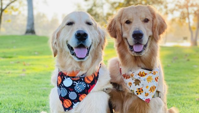 55 Fall Captions For Your Dog Photos