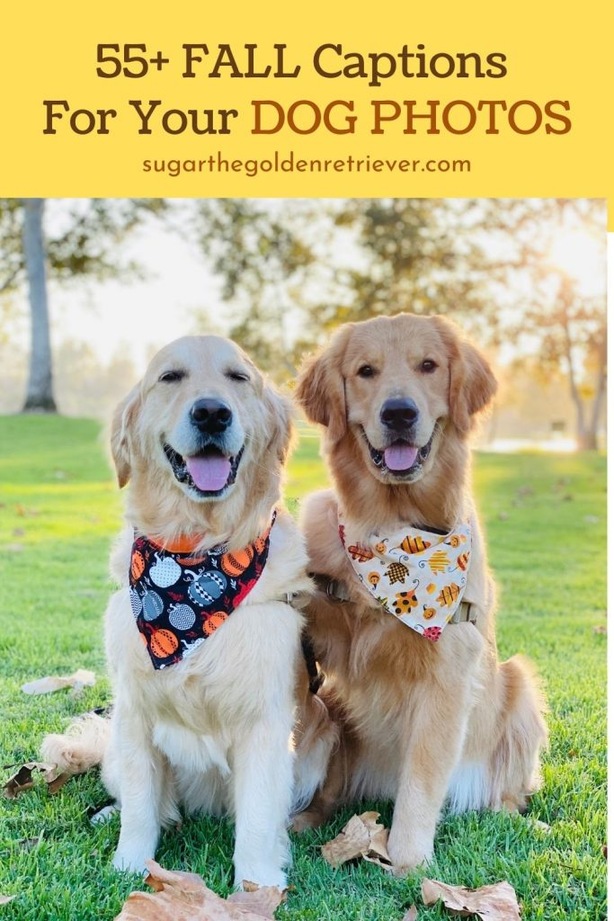 Fall captions for your dog photos